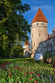 Towers of Tallinn. Estonia — Stockfoto