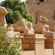 Foto Stock: Sphinxes avenue. Luxor, Egypt