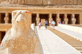 Horus. Temple of Hatshepsut. Luxor, Egypt — Stock Photo