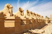 Aleja sfinksów. luksor, egipt — Zdjęcie stockowe
