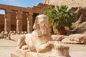 狮身人面像。卡纳克神庙卢克索,埃及 — 图库照片