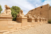 Avenue des sphinx. louxor, egypte — Photo