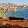 Stock Photo: CostAdeje. Tenerife. Canary Islands