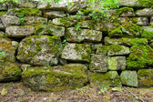 Mossy wall — Stock Photo