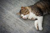 Chat endormi — Photo