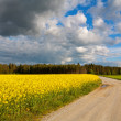 Country road and rapeseed field — Stock Photo