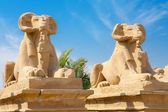 Sphinxes. Luxor, Egypt — Photo