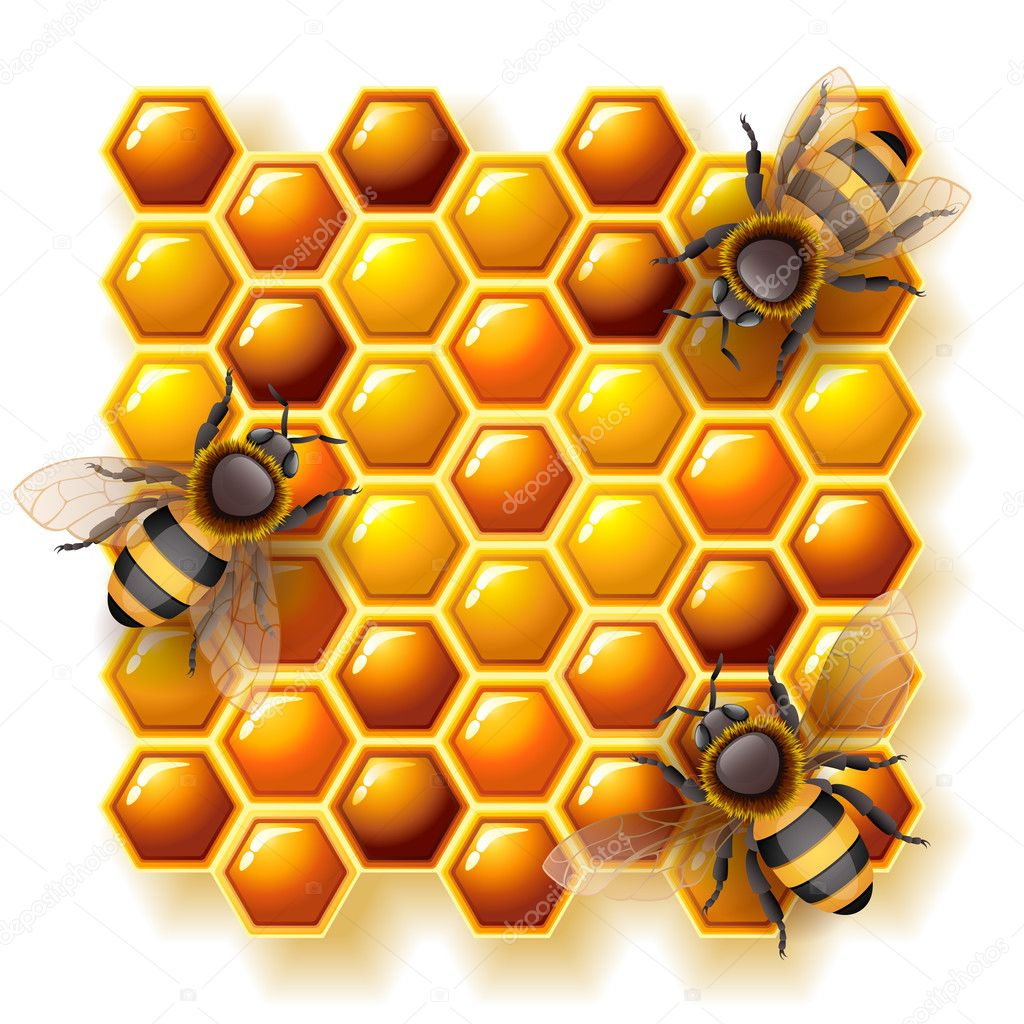 Vector illustration - bees on honeycomb, EPS 10, RGB.Use transparency and blend modes — Stock Vector #12171152