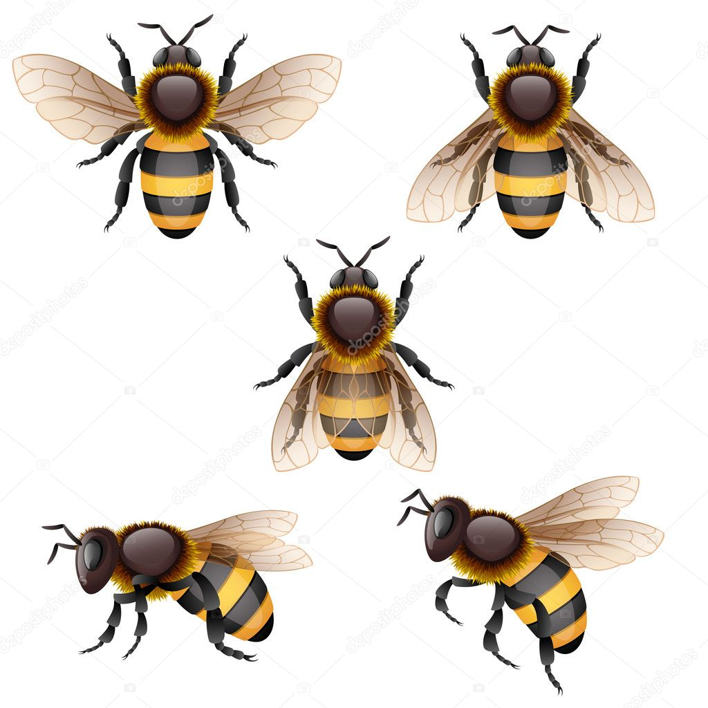Vector illustration - bees on white, EPS 10, RGB. Use transparency. — Stock Vector #12180838