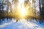 Beautiful winter sunset with trees in snow — Stock Photo