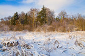 Winter snowy landscape at sunset — Stock Photo