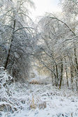 Winter snowy trees landscape — Stock Photo