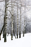 Berk winter alley — Stockfoto