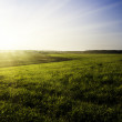 Field and sunset sky — Stock Photo #30973551