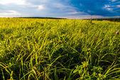 Campo de hierba y el cielo dramático al atardecer — Foto de Stock