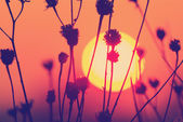 Sunset landscape with sun over dry grass — Stock Photo