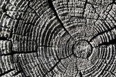 Texture of an old wooden log — Stock Photo