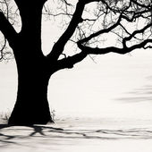 Silhouette of an old tree in the winter — Stock Photo