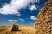 Perspective landscape with haystacks and blue sky — Stock Photo