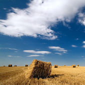 Landscape with haystacks and blue sky — Stock Photo