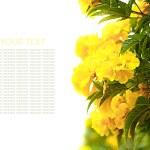 Постер, плакат: Yellow hydrangea flowers