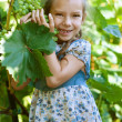 Little girl with pigtails holding bunch of grapes — Stock Photo #13523489
