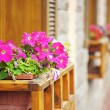 Petunia flowers on windowsill - Stok fotoğraf