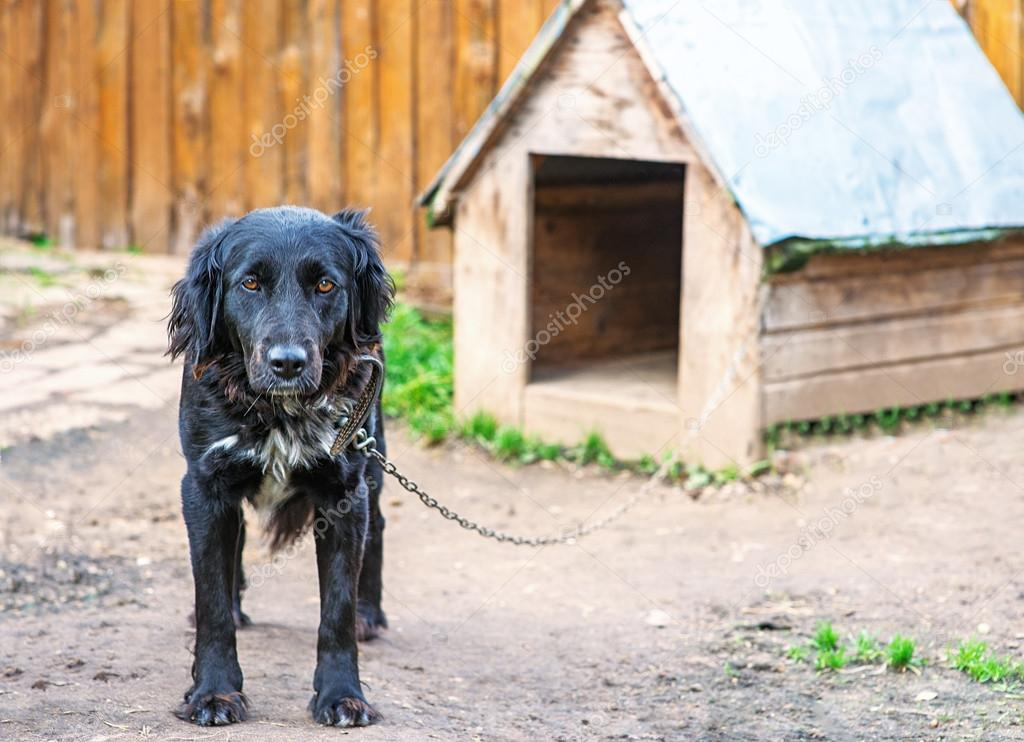 Black dog on chain around kennel. — Stock Photo #17463787