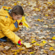 Little girl collects fallen maple leaves — Stock Photo