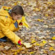 Little girl collects fallen maple leaves — Stock Photo #19313377