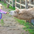 Little girl feeding two-humped camel - Stock Photo