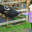 Little girl feeding buffalo — Stock Photo