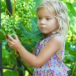 Royalty-Free Stock Photo: Little girl with pigtails holding bunch of grapes