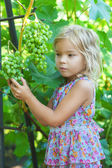 Little girl with pigtails holding bunch of grapes — Stock Photo