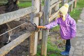 Little girl feeding donkey — Stock Photo