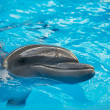 Dolphin in basin of oceanarium — Stock Photo #27783199