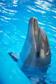 Dolphin in basin of oceanarium — Stock Photo