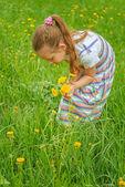 Little girl picking flowers — Stock Photo