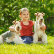 Young Girl and two fox terriers — Stock Photo #45764479
