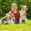 Young Girl and two fox terriers — Stock Photo #45764481