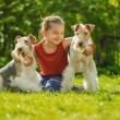 Young Girl and two fox terriers — Stock Photo #45764483