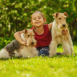 Young Girl and two fox terriers — Stock Photo #45764493