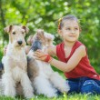 Young Girl and two fox terriers — Stock Photo #45764513