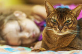 Abyssinian cat and small girl — Stock Photo
