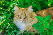Beautiful red cat — Stock Photo