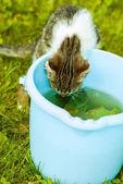 Small kitten drinks water — Stock Photo