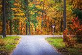 Road through autumn Reserve — Stock Photo