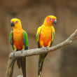 Two beautiful parrots — Stock Photo