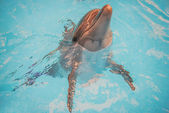 Dolphin in basin of oceanarium — Stock Photo