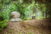 Large boulder in dense forest — Stock Photo